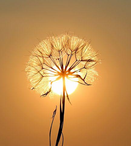 Healing i tanke och handling